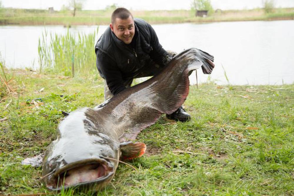 harcsa újkígyós horgász