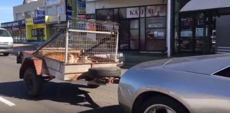 Lamborghini murcielago kecske utánfutó