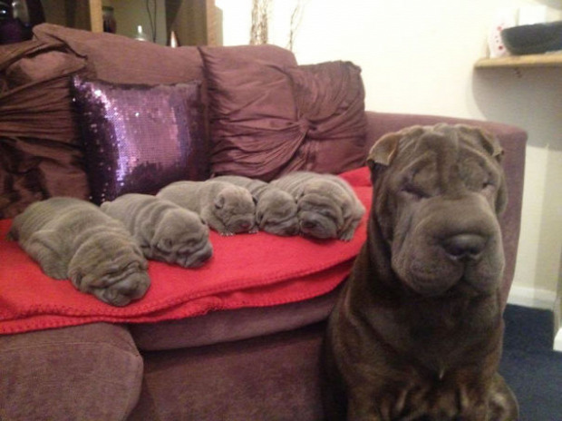 I, Big Wrinkle, Made All These Little Wrinkles