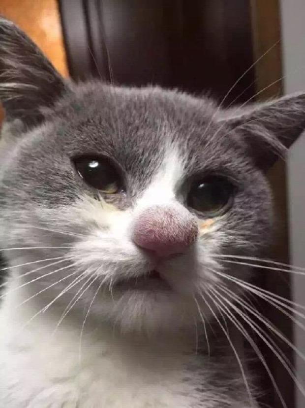 méhcsípés kutya cica