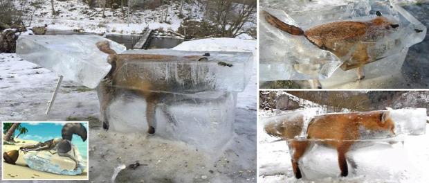 róka jég Duna