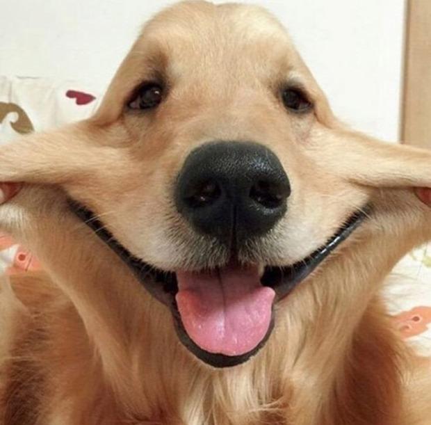 kutya vigyor