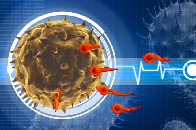 molbiol biológia élettudomány orvosbiológia CRISPR géntechnológia IVF