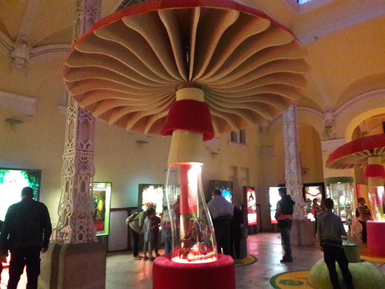 program ajánló kiállítás kultúra természet