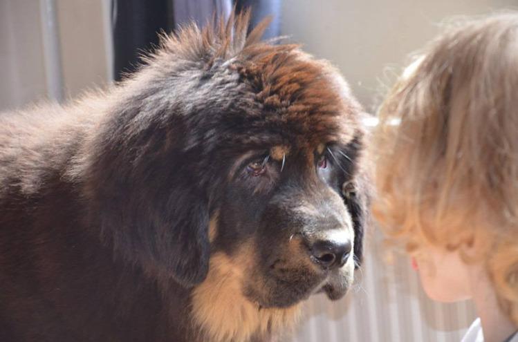 állat kutya gyereknevelés