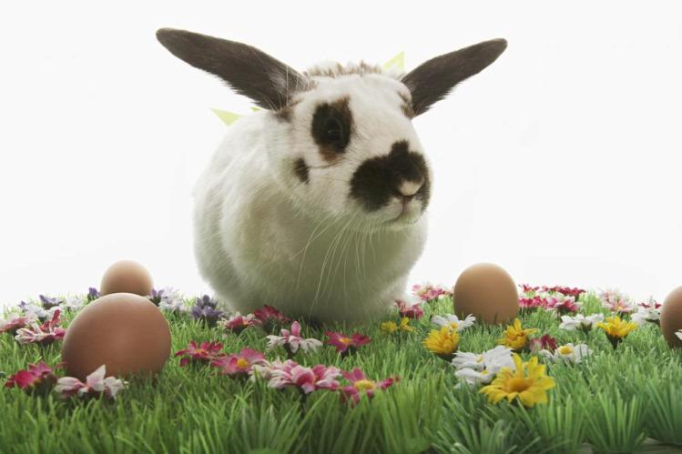 nyúl húsvét kultúra mese