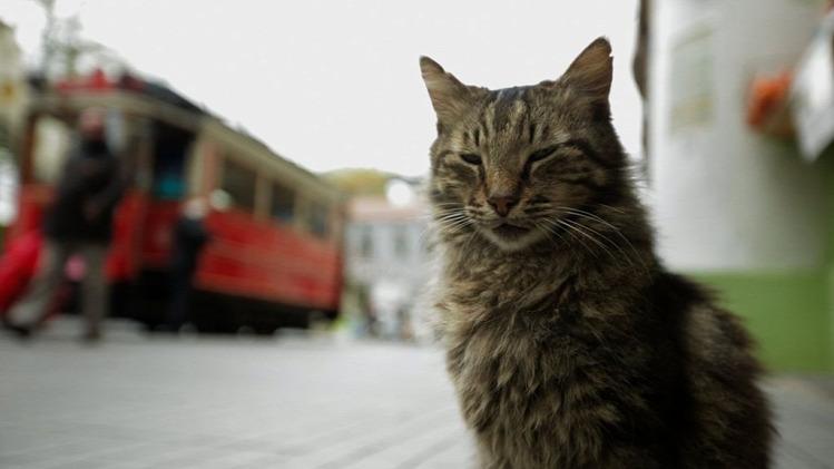 Tünde mozi macska Isztambul filmajánló