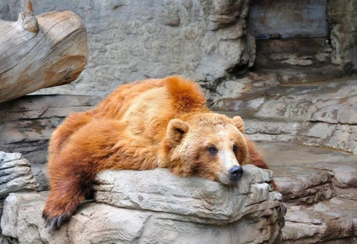 Tünde programajánló medve
