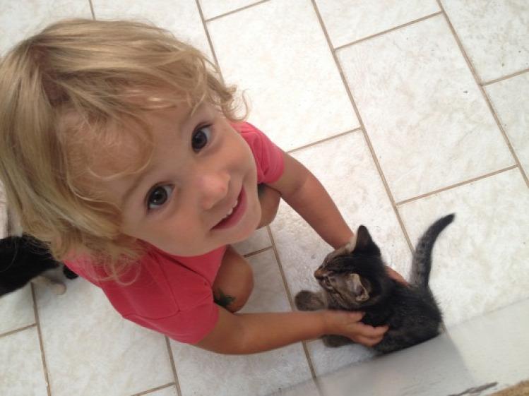Tünde állat macska tippek