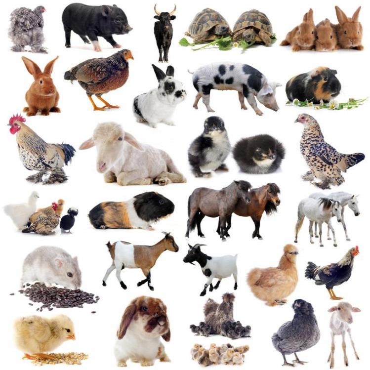 Tünde programajánló állatok világnapja hétvége fesztivál