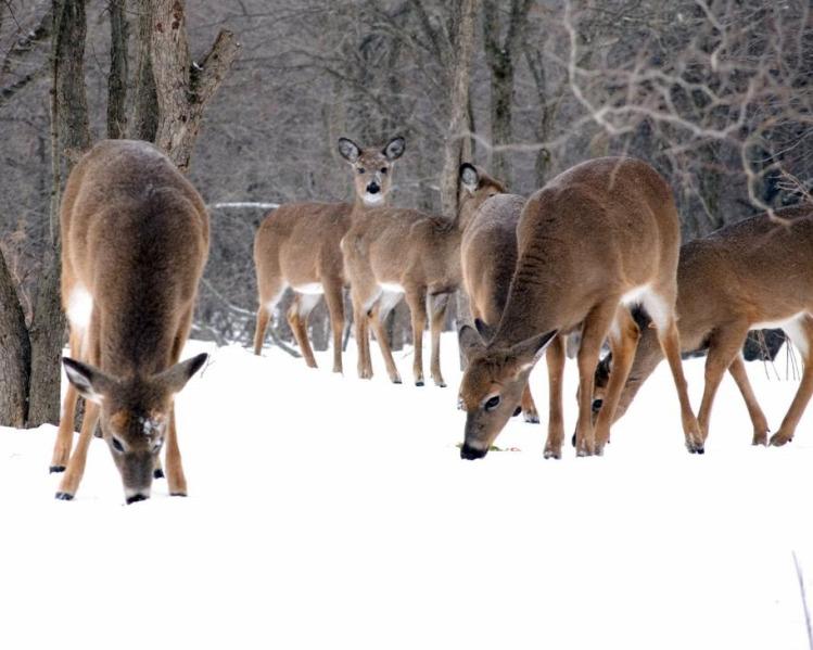 Tünde programajánló programok hétvége tél vadetetés