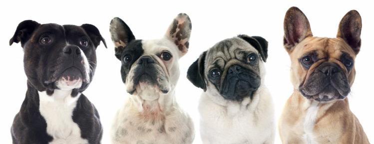 kutya kutya behívása kutyatartás állattartás teljesenmindegy