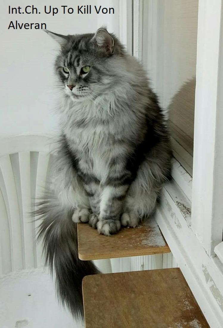 Veg macska állat
