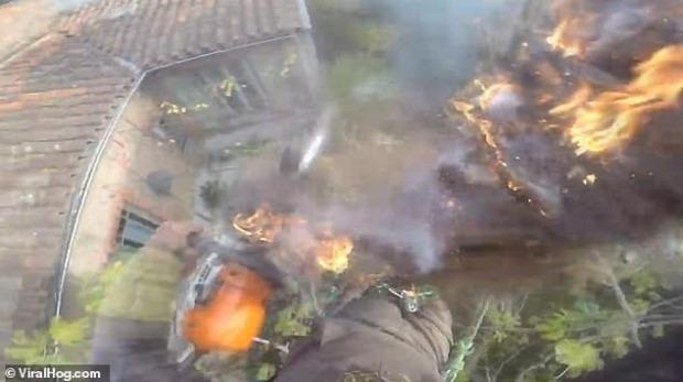 favágó ppálmafa tűz