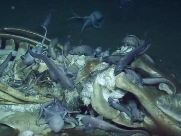 bálna tetem tengeralattjáró  cápa