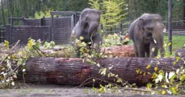 elefánt fatörzs játék