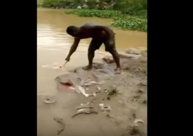 hal fogás horgászat kapás halászat