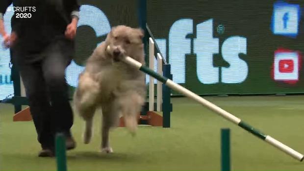kutya  agility verseny játék
