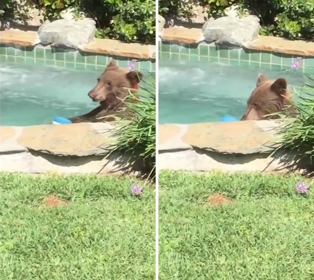 medve fürdés jacuzzi