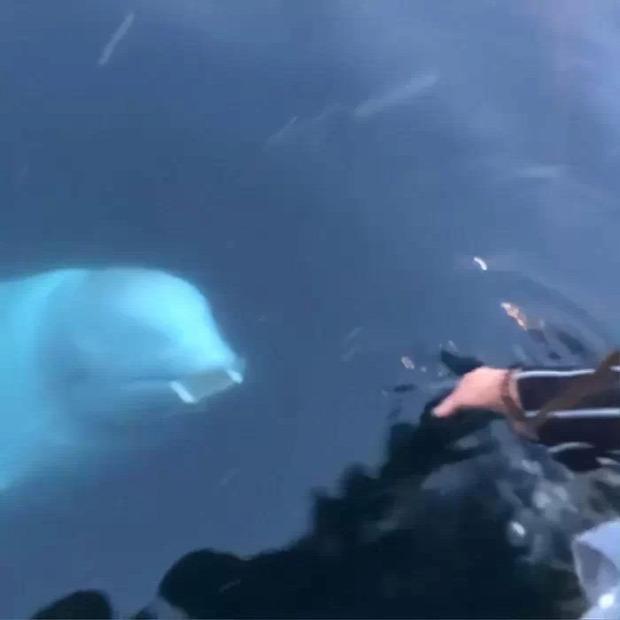 delfin mobil telefon beluga