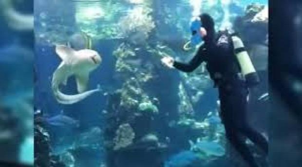 akvárium búvár cápa zebra takarítás