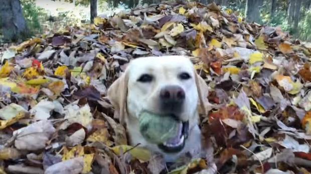 kutya falévl ugrál halom