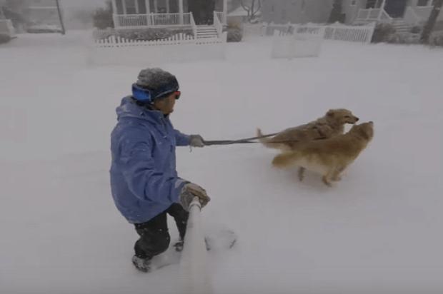 kutya  séta snowboard