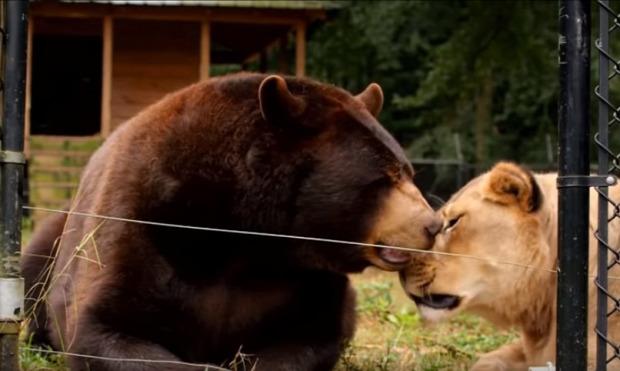állat  barátság