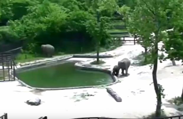 elefant esik medence