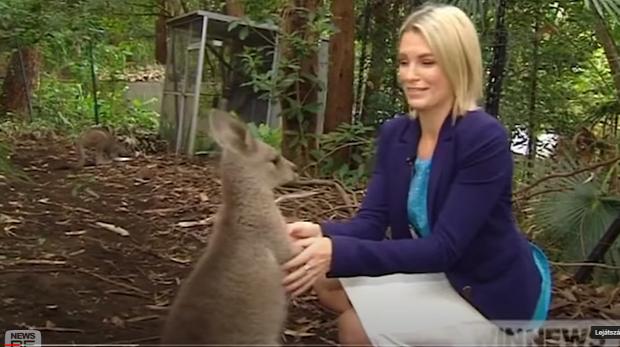 riporter élő közvetítés állat probléma baleset