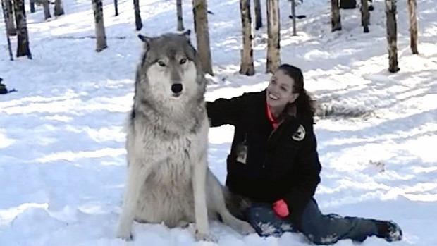 farkas  óriás szeretet