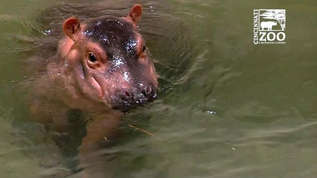 viziló bébi tanul úszás