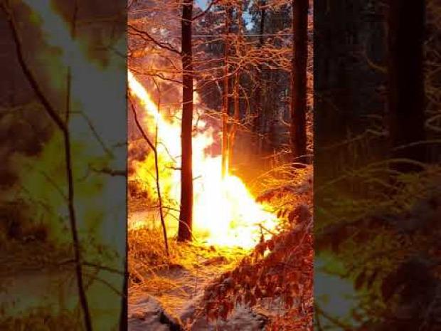 erdő tűz elektromos felsővezeték