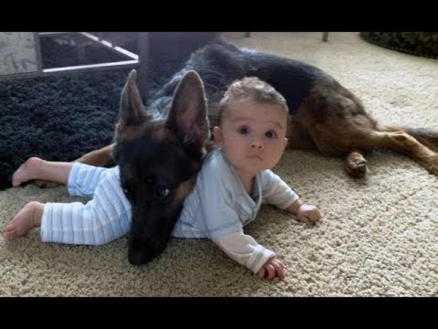 német juhász kutya baba gyerek mentés