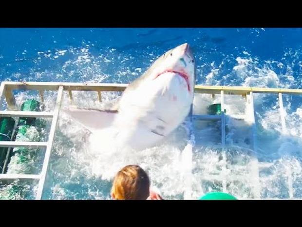 cápa  les etetés baleset cápaketrec