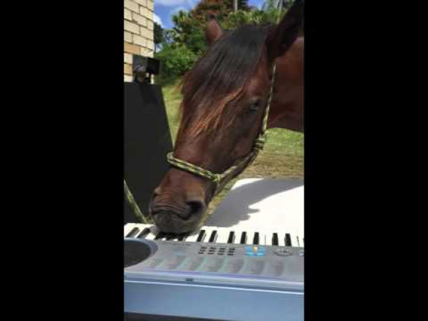 ló zongora szintetizátor