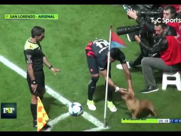 foci mérkőzés kutya