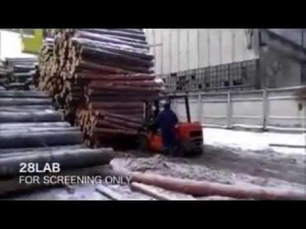 fatelep fa rönk zuhanás
