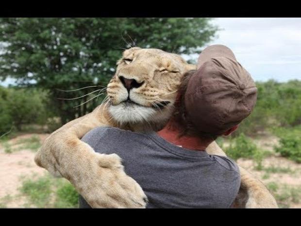 állat szeretet ölelés