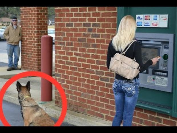 kutya támadó tolvaj