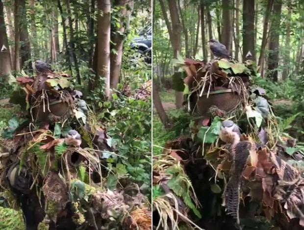 erdő  álcázás airsoft madár
