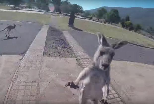 ejtőernyős kenguru