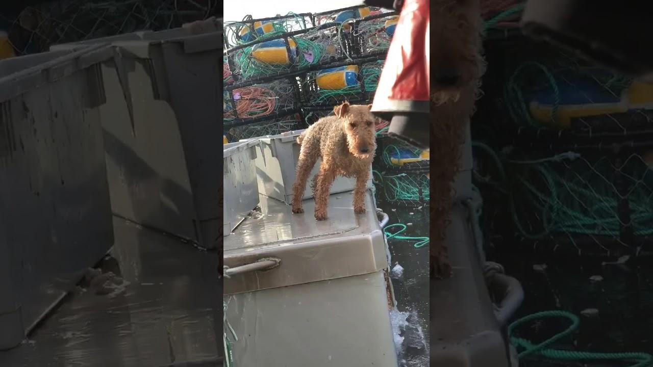 kutya hajó fedélzet hullám ingadozik