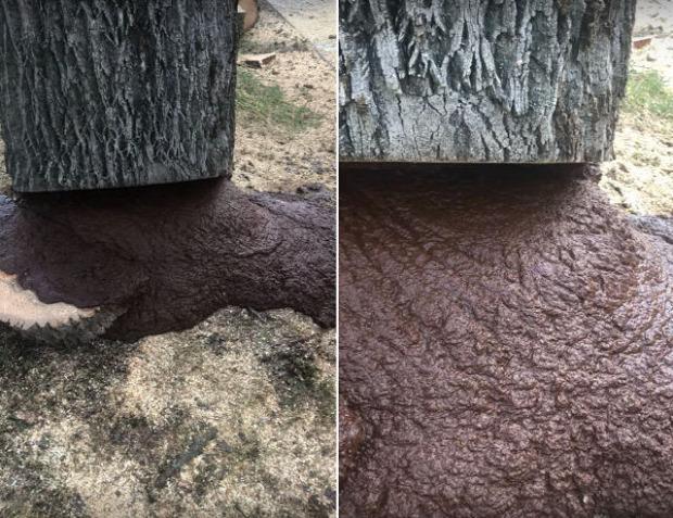 fa kivágás vér rothadás