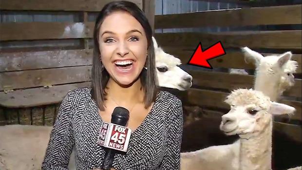 riporter állat riport