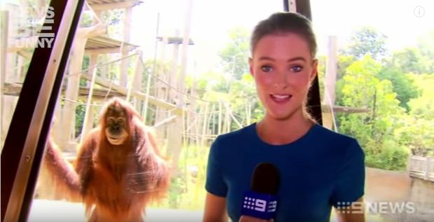 riporter hiradós állat