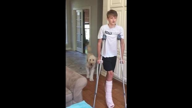 gipsz láb kutya