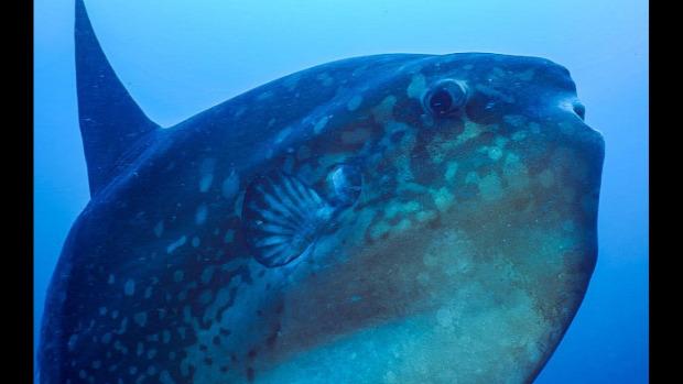 tengeralattjáró naphal biológus óceán merülés