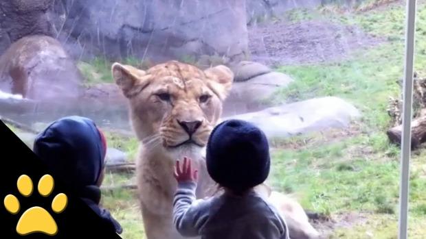 állatkert üvegfal