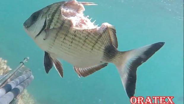 hal harapás él sérülés súlyos